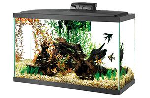 aquarium with log and black fish