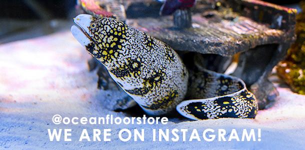 Fish Store and Aquariums for Sale in Phoenix, AZ | Ocean Floor Store