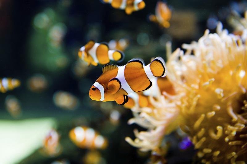 20 Best Saltwater Aquarium Fish In 2020 For Beginners